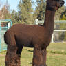 CRIA'S SIRE:  ESTATES SATIN CLOUD
