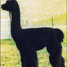 MATERNAL GREAT-GRANDSIRE:  SINOPSIS NOCTURNA 527