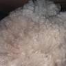 Hettie's juvi fleece...very bright and uniform!