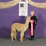Alpaca Palace Zagato's Zephrite - 2019 Futurity 2nd Place behind RC
