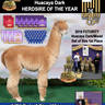 Service Sire: Sunset Hills Zagato and also Sire of male cria Z I Am Stoked