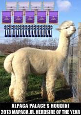 Alpaca Palace's Houdini (1/2 Interest)