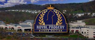 2017 Royal Progeny Alpaca Auction