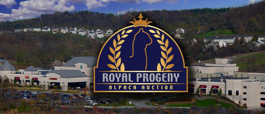 2018 Royal Progeny Alpaca Auction