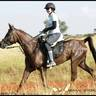 Cheval de Mer Anastacia