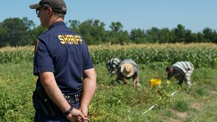A sheriff's deputy keeps watch while inmates from the Smith County Jail tend a garden in Tyler on July 12, 2013.