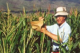 Wenwei Xu, a professor and corn breeder based at the Texas A&M Agricultural Research and Extension Center in Lubbock.