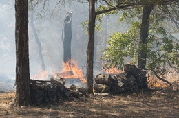 A wildfire approaches a house off Texas 71 west of Bastrop during Monday's wildfire on September 5, 2011.