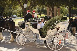 Christmas tree grower Marshall Cathey, center, and his family from Denison, TX arrive via horse-drawn carriage at the Texas Capitol on November 28, 2011 with one of several Capitol Christmas trees that will adorn the House and Senate chambers and hallways.