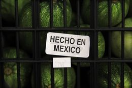 Mexican produce makes up 40 percent of the business Nicho Produce does in the Rio Grande Valley.