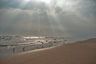 The beach in the Laguna Atascosa National Wildlife Refuge on South Padre Island.