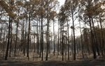 The Texas Forest Service wants to plant 4 million loblolly pine seedlings in Bastrop State Park over the next few years, to help restore the forest after last year's fires. But stored seedlings were almost thrown out ahead of the fires.