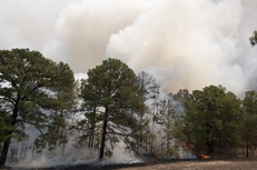 The pines on the south side of Texas Hwy 21 erupt in flames and smoke during the wildfires on September 6, 2011.