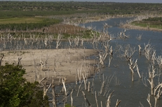Trees that were once mostly submerged are now high and dry in the southwestern portion of O.H. Ivie Reservoir southeast of Ballinger Texas. The reservoir is less than 30 percent full, as of April 20 2011.