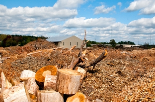 This woody debris will fuel a biomass power plant in Lufkin, the first of its kind in Texas, which is expected to begin full operations this spring.
