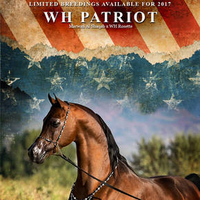 WH Patriot - Limited Breedings 2017