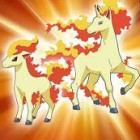 ponyta2255, United States of America