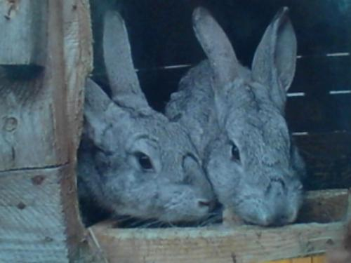 CUTE BUNNY RABBITS FROM BELARUS!