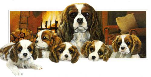 Very nice card of Cavalier King Charles Spaniel Family, Netherlands