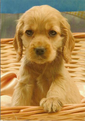 a cute puppy from Ewoud, 14 years old.