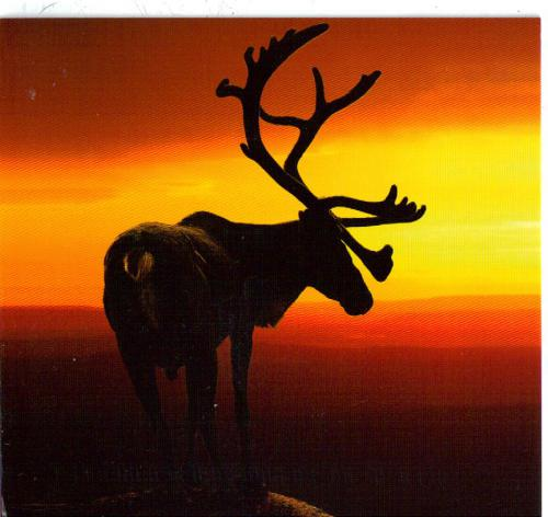 Beautiful reindeer card from Finland