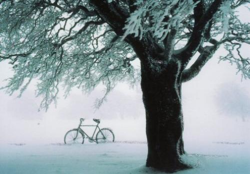 I love the snowy tree and bicycle A__A