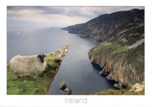 Sheep standing precariously at the mighty Slieve League cliffs, the highest sea cliffs in Europe, Bunglas, Country Donegal.