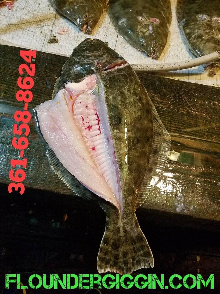 Big flounder 1