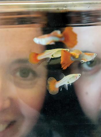 Professor Bleakley and W. Jackson Reilly '16 examine fish behavior.