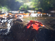 Fall In The Creek