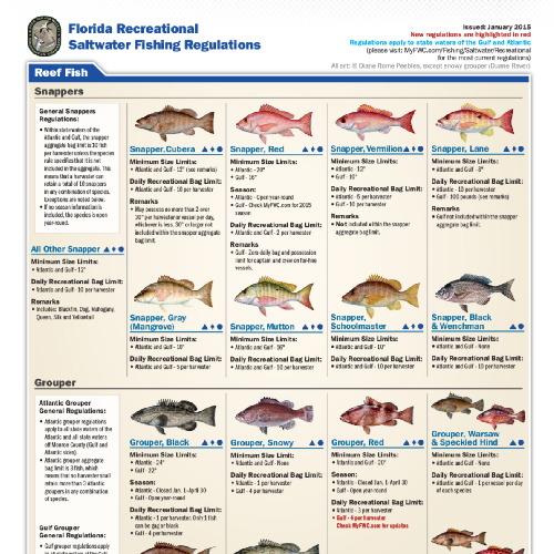 Florida 2015 saltwater fishing regulations edocr for Florida fish and wildlife fishing license