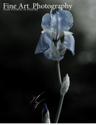 Fine Art Photography by Jeremy Byers-Floral to Figure