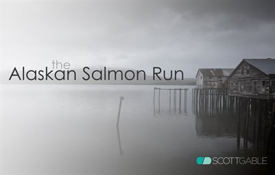 The Alaskan Salmon Run