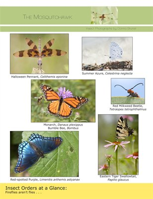 Insect Identification - Orders