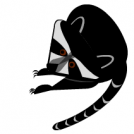 Raccoons vs SG