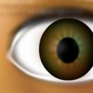 Abrotons's eye