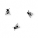 More Flies...