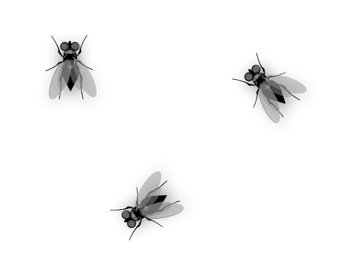More Flies...