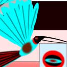 Kolibri erraldoia 3 - Anatomia