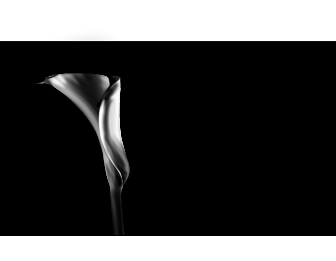 images of nature: calla lily