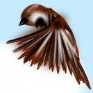 Bi artatxori hegaz egiten Two sparrows flying
