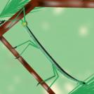 Insektu makila - Stick insect
