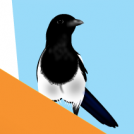 Mikak 3 - Magpies 3