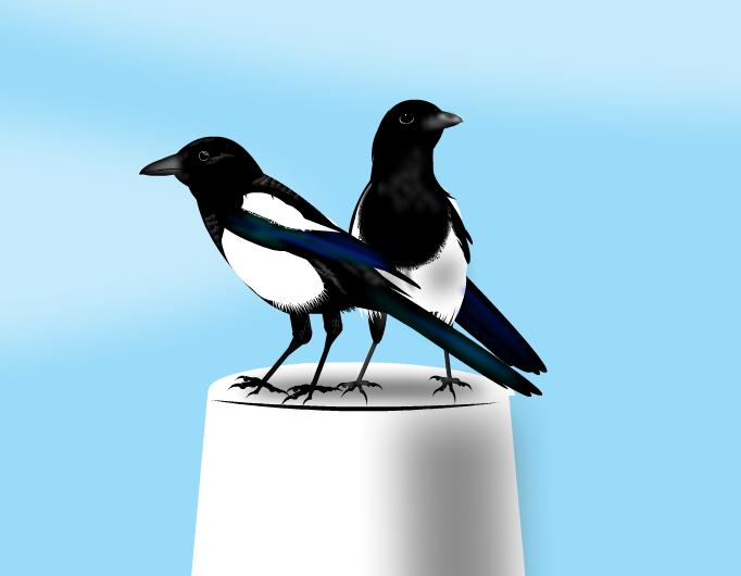 Mikak 4 -Magpies 4