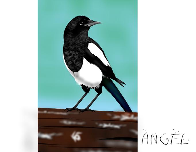 Mika - Magpie 4