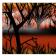Orange Homage