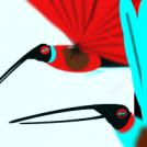 Kolibriak