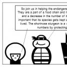 Save the Shortnose Sturgeons