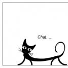 Le chat du jour