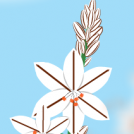 Asphodelus aestivus 2